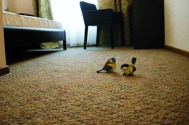 Особенности ковролина для дома и офиса 2