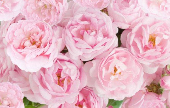 В Одессе закрывается городская цветочная галерея